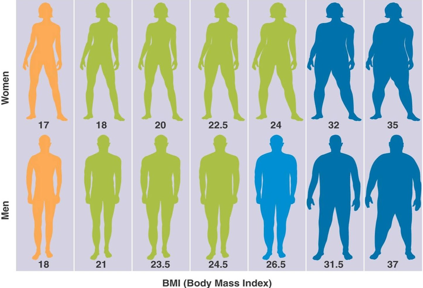 female body fat percentage comparison