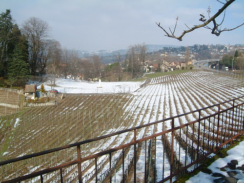 Montreux Vineyards Winter