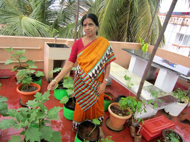 how to grow vegetables in balcony in india