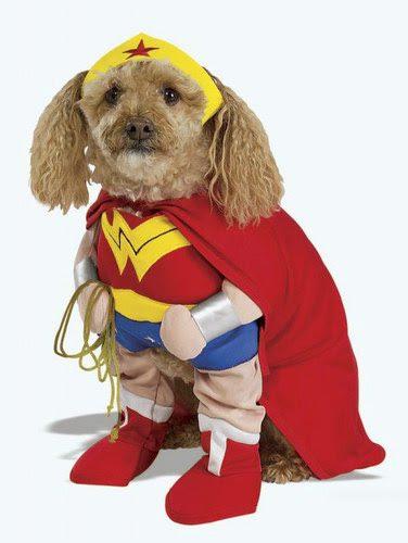 כלב אשר מחפש לגיבור על