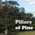 Pillars of Pine