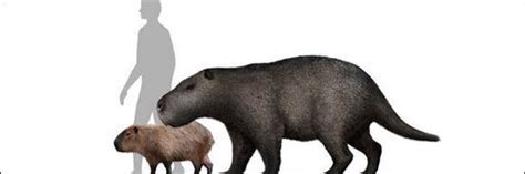 7 (Thankfully) Extinct Giant Versions of Modern Animals   Cracked.com