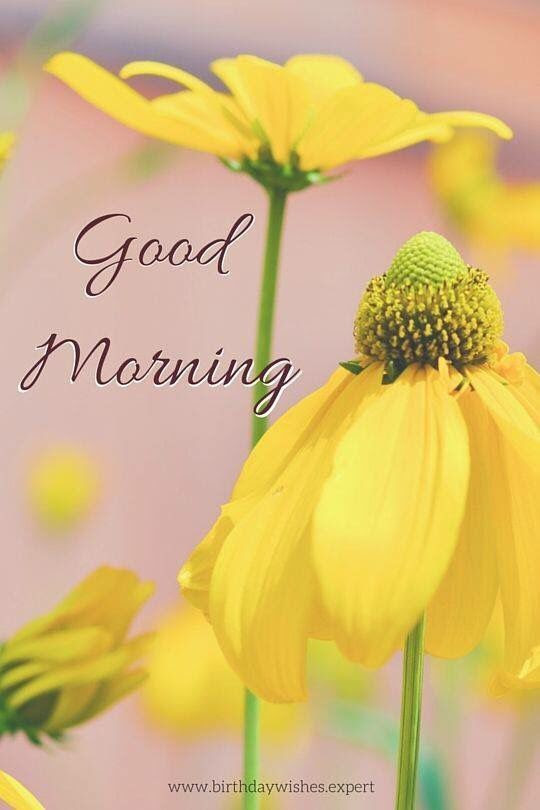 Beautiful Good Morning Sunflowers Pictures Photos And Images For