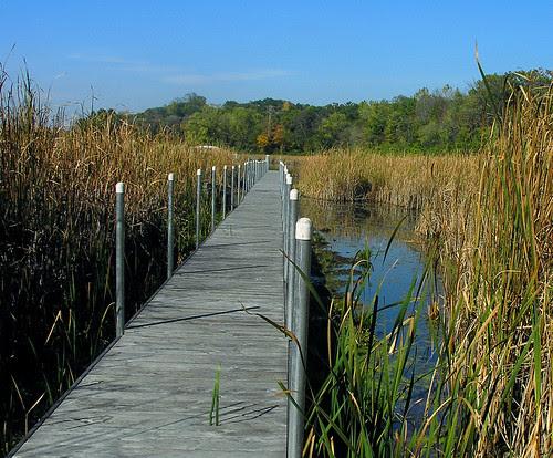 Wetland dock