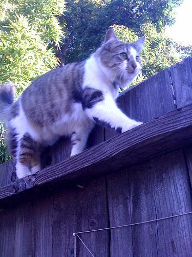 kitten_cat
