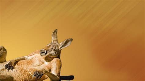 Tanlines cigarettes wink squint smoker kangaroos chill
