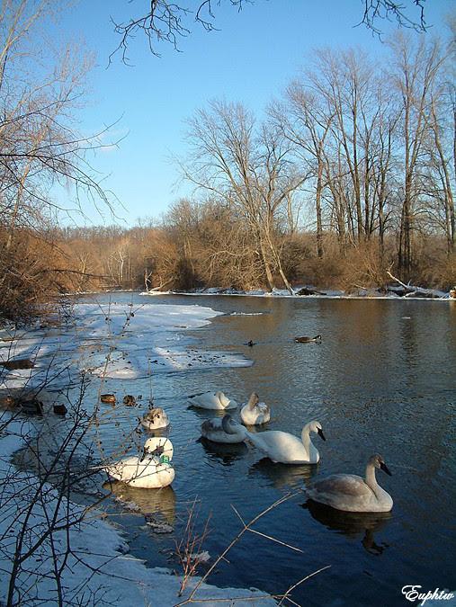 swan river2004 021