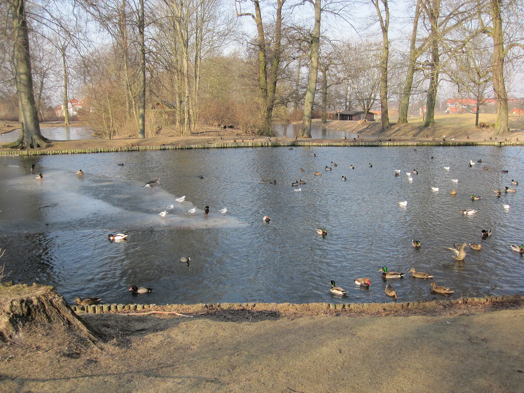 Lake with birds in the park