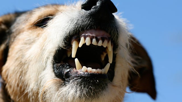 PHOTO: Insurers last year paid out $489 million for claims involving dog bites in the home.
