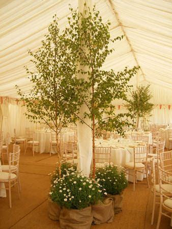 Ornamental Trees great decor for a ceremony or boring