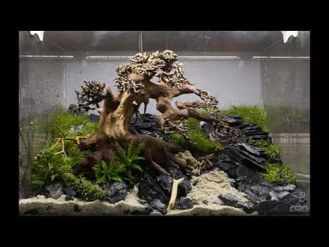 Aquarium moss tree Bonsai driftwood Easy aquascape YouTube