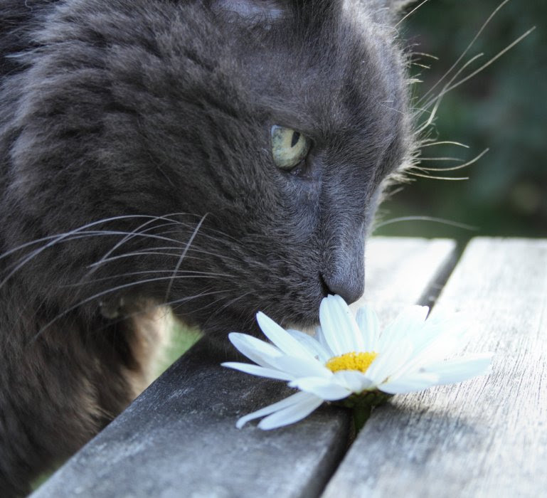 Posky and flower