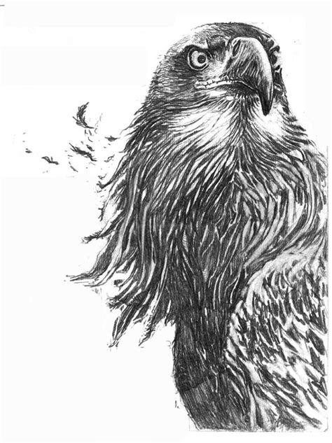 images  eagles  pinterest art drawings