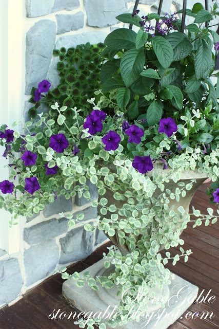 front porch planter purple flowers