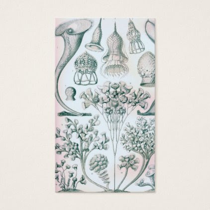 Ernst Haeckel Ciliata Business Card