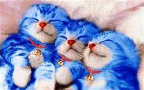 kucing cantik lucu  imut ketawa lucu
