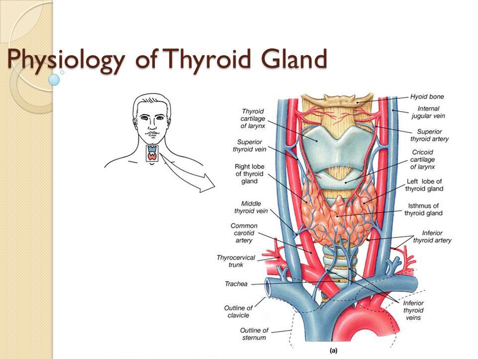 Thyroid Disease: Thyroid Anatomy And Physiology Slideshare