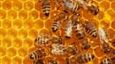 2 Boys Arrested After Vandalism That Killed 500,000 Bees On Iowa Honey Farm