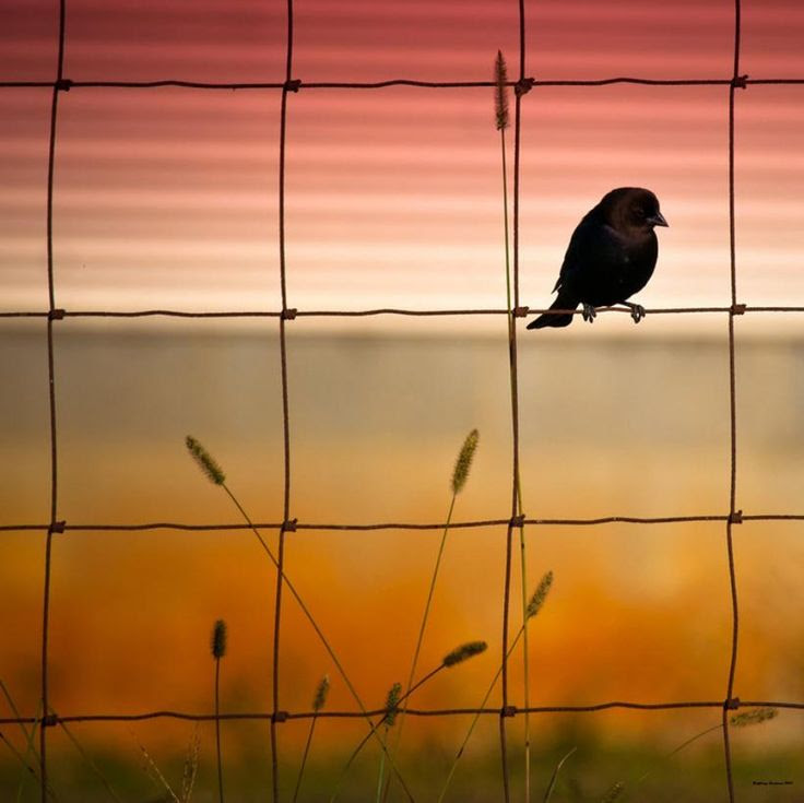Bird at sunset...