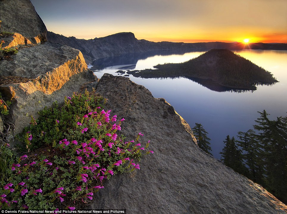 Winner: Dennis Frates beat 18,000 entries to win the overall International Garden Photographer of the Year competition with his photograph entitled Penstemon Sunrise which captures Crater Lake National Park, Oregon