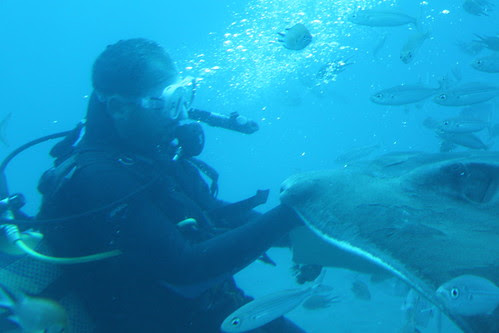 084/365:2010 Under the Sea