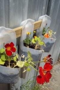 milk jug flower pots