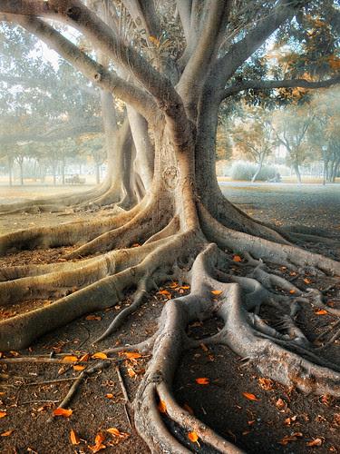 Roots por Zú Sánchez.
