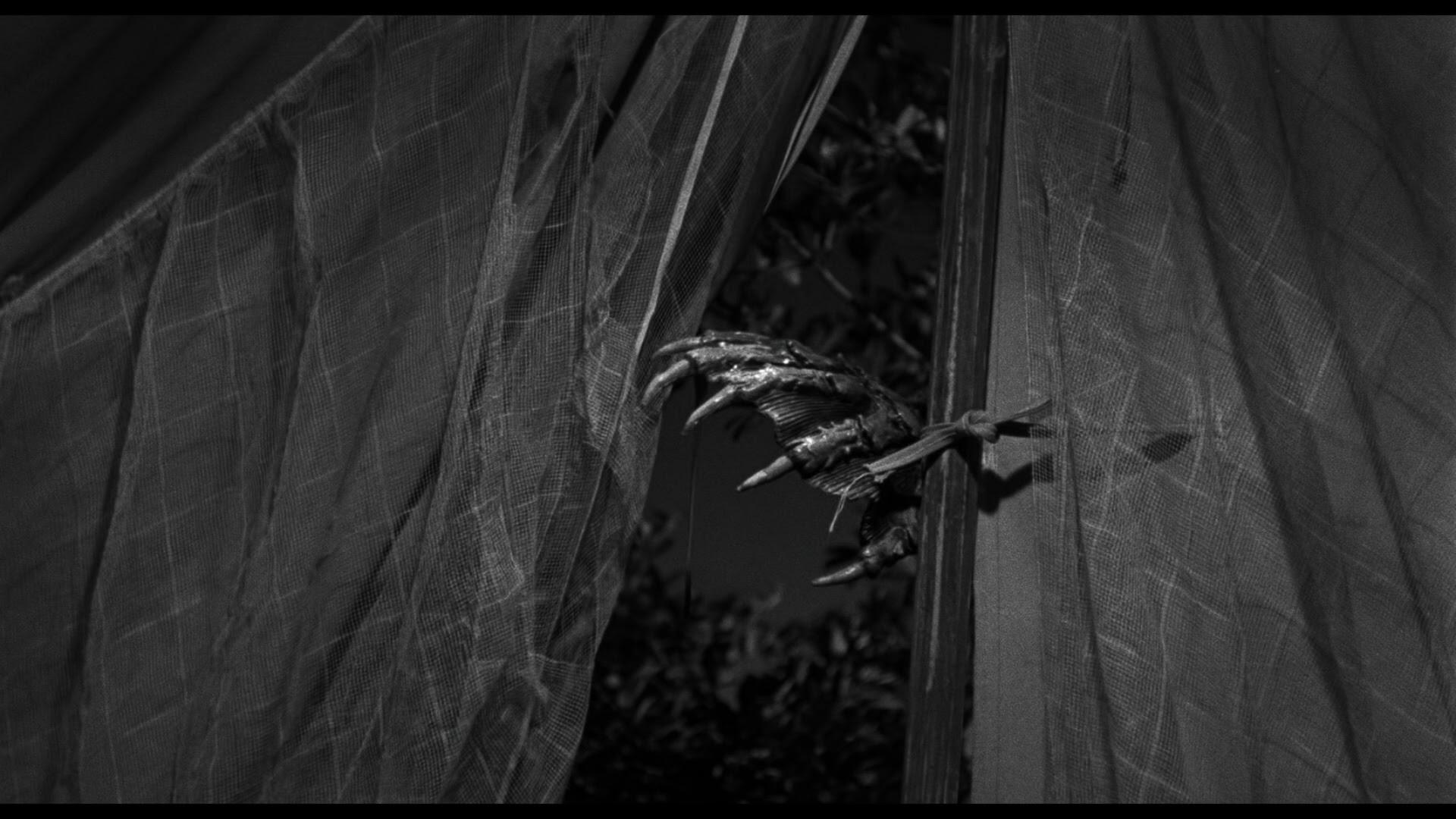 Creature From The Black Lagoon Blu Ray Julie Adams