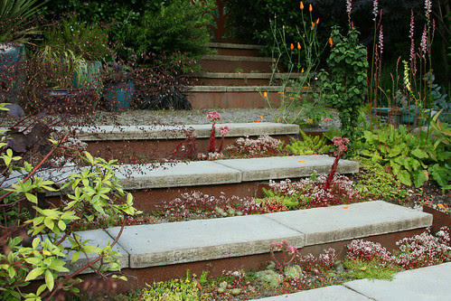 steps with succulents