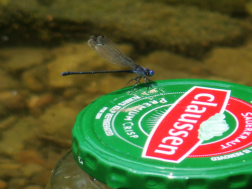 Clausens dragonfly
