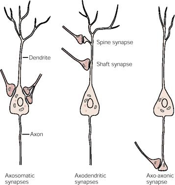 Axosynapse