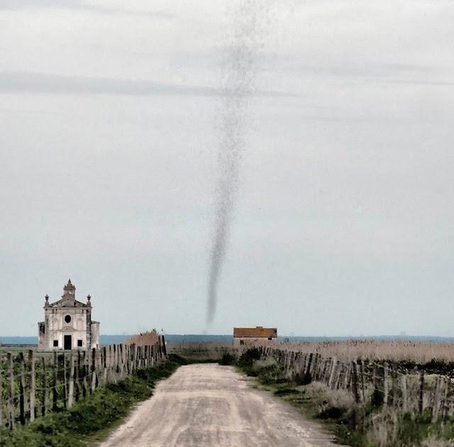 Un tornado de... ¡bichos!