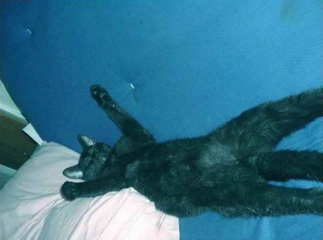 The Laziest Cat Ever
