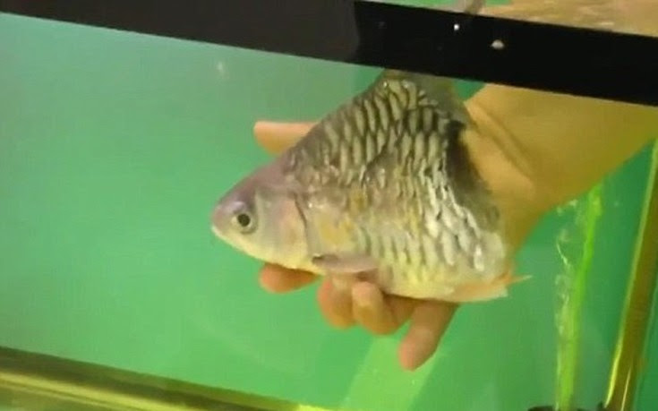 fishss1