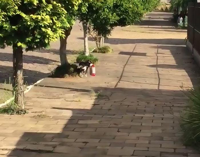 dog-buys-food-himself-pituco-brazil-5