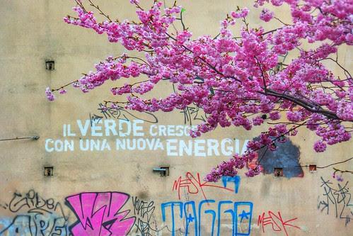 Il verde cresce con una nuova energia by Ylbert Durishti