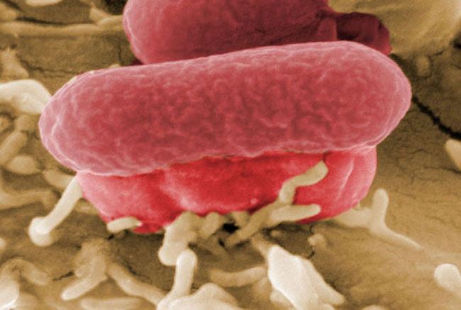 batteri (5)