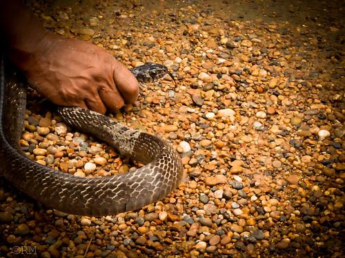 Snake locked by Rune Mo