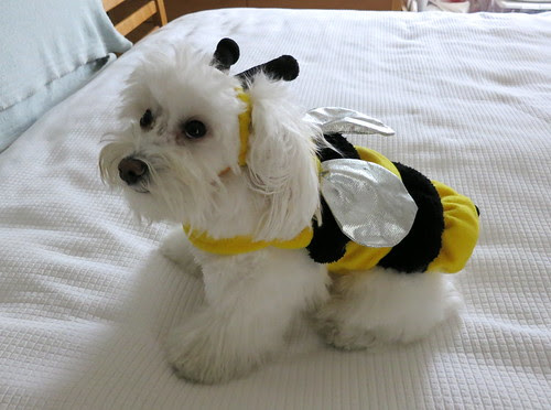 """Happy Halloween from To""""BEE"""""""