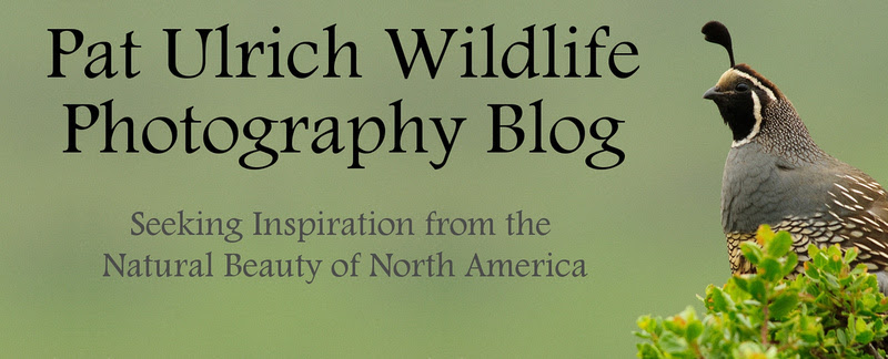 Pat Ulrich Wildlife Photography Blog