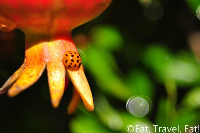 Los Angeles County Arboretum and Botanic Garden- Arcadia, CA: Ladybug on