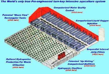 Aquaponics Business Plan Pdf Aquaponic