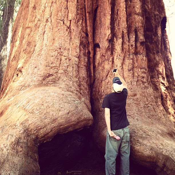 Day206 Visited the Sequoia National Forest.  7.25.13 #jessie365 #sequoia #forest
