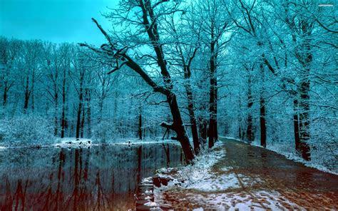 dark winter forest wallpaper images qh world desktop hd wallpapers