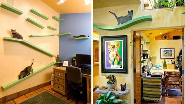 Ξόδεψε 25.000 ευρώ για να μετατρέψει το σπίτι του σε παιδική χαρά για γάτες (2)