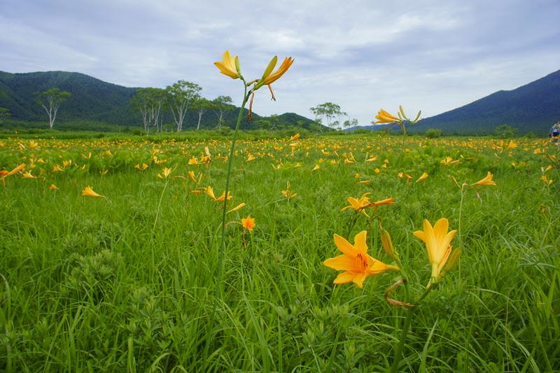DSC06576 Oze:Mt.Shihutsu Hike