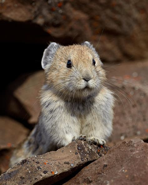 """Tiny, Rabbit Like Animals Eating """"Paper"""" to Survive Global Warming"""