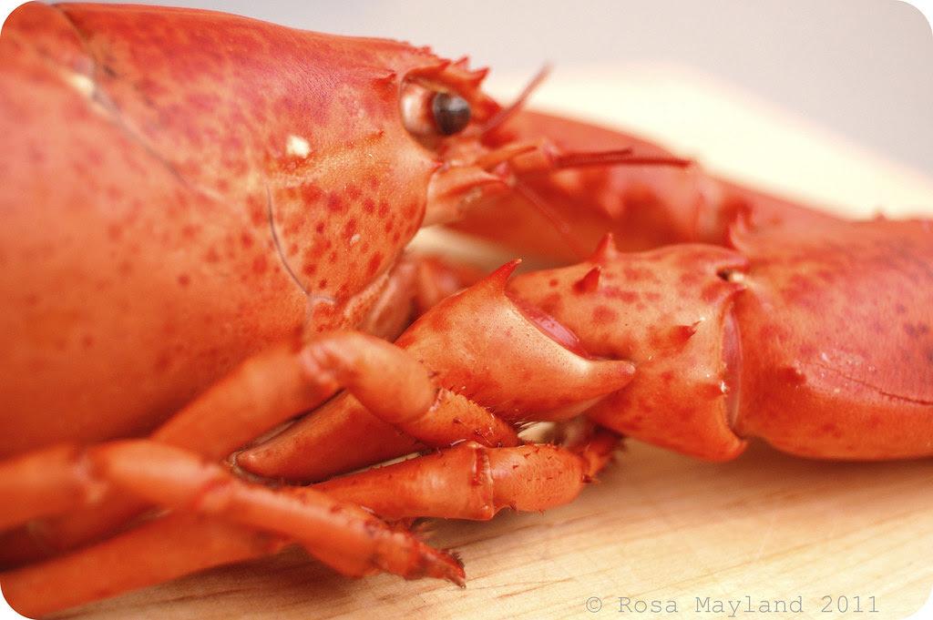Lobster 7.1 bis