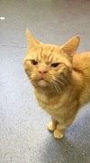 Rescatan a un gato con la cara más gruñona que jamás se haya visto y todos se enamoran de él