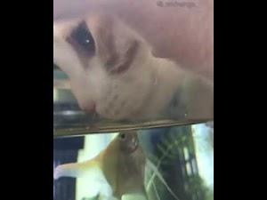 Bonding between fish & kitten